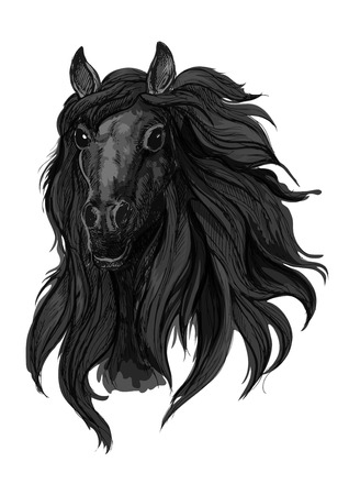 filly: Black arabian racehorse sketch of horse head with dark thick and wavy mane. Equestrian sport, riding club or horse racing design