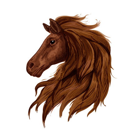 eventing: Sketch of brown horse head. Bay purebred stallion horse of arabian breed. Horse racing, equestrian eventing, riding club design
