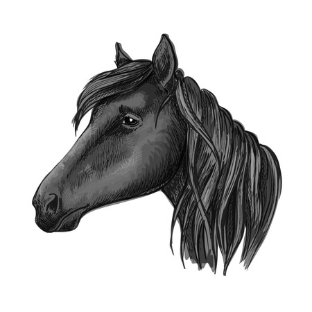 filly: Black riding horse sketch with head of purebred arabian mare horse. For equestrian sporting competition, horse racing or t-shirt print design