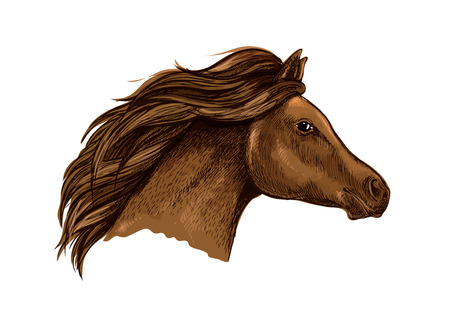 filly: Sketched brown horse head icon of purebred racehorse with flying mane. Horse racing symbol or equestrian sporting theme design Illustration