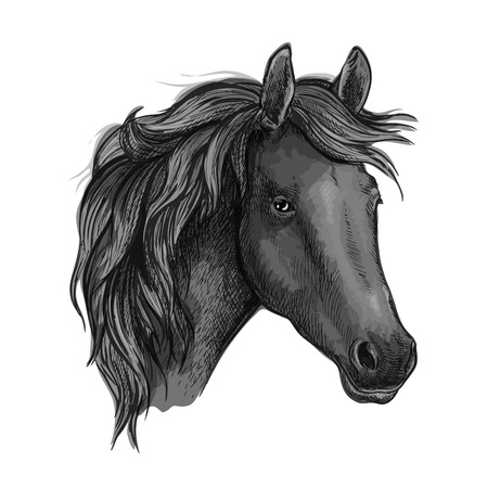 filly: Sketch of black horse head with arabian racehorse mare. Use as equestrian sport club, horse racing or t-shirt print design