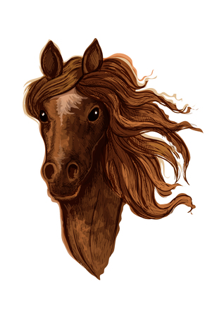 filly: Sketch of brown arabian mare horse head with beige star mark in the middle of a forehead. Equestrian sporting competition, horse racing or t-shirt print design Illustration