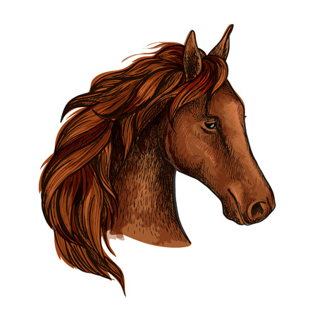 racehorse: Brown stallion horse head sketch of purebred racehorse with chestnut thick mane. Equestrian sporting club, horse racing or equine sporting competition themes design