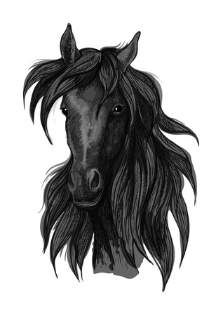 filly: Arabian horse head sketch of black purebred racehorse mare. Use for horse racing badge, equestrian sport symbol or t-shirt print design