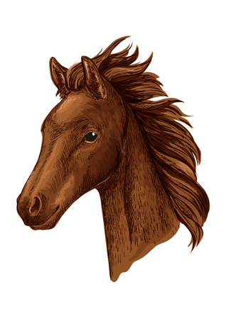 filly: Brown mare horse head sketch with young chestnut filly of arabian breed. Equestrian sport, horse racing or horse breeding farm design