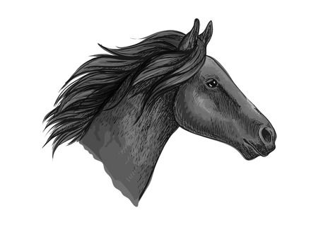 racehorse: Black stallion horse head sketch with purebred racehorse of arabian breed. Horse racing badge, equestrian sporting competition symbol or t-shirt print design Illustration