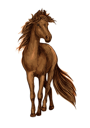 brown horse: Sketch of brown horse with strong bay stallion of arabian breed with lush long mane and tail. Horse racing, equestrian sport or riding club design Illustration