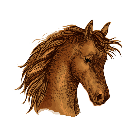 the arabian mare: Sketched horse head of arabian breed. Brown purebred mare horse with flying mane. Equestrian sporting competition, horse racing or t-shirt print design