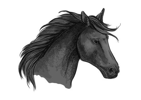 wild horses: Sketched riding horse head. Black purebred arabian stallion for riding club symbol, equestrian sporting mascot or horse racing badge design