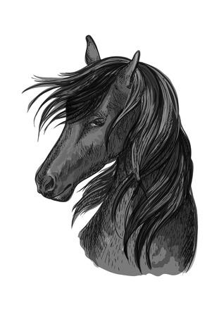 Sketched horse head of black purebred arabian stallion horse. Equestrian sport symbol, riding club badge or horse racing design