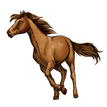 filly: Running horse sketch with galloping brown arabian racehorse. Equestrian sporting competition, horse racing or t-shirt print design