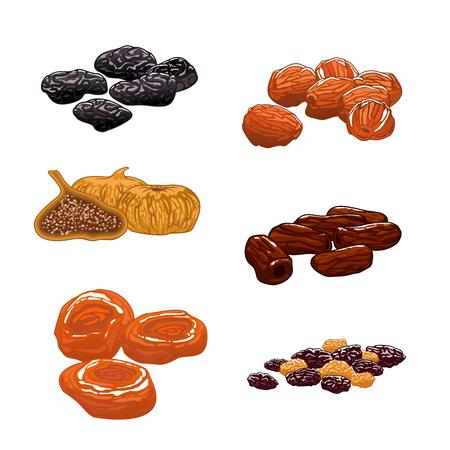 Las frutas secas establecen. iconos del vector aislados de pasas, dátiles, higos, albaricoques, ciruelas, ciruelas pasas. aperitivos dulces y postres Ilustración de vector