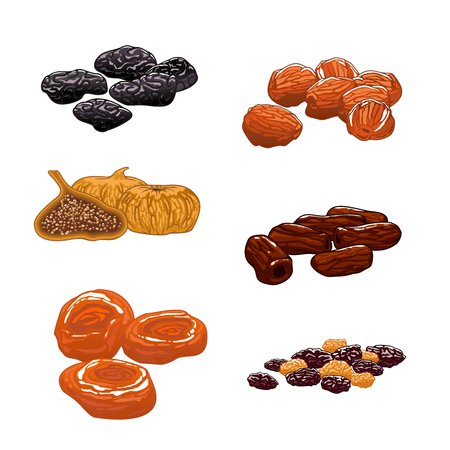 frutas deshidratadas: Las frutas secas establecen. iconos del vector aislados de pasas, dátiles, higos, albaricoques, ciruelas, ciruelas pasas. aperitivos dulces y postres