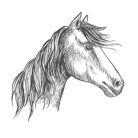 glance: White horse with wavy mane. Mustang stallion sketch portrait with peaked ears and kind trustful glance of eyes