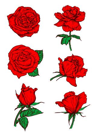 Rosas rojas papilas iconos. Vector los elementos botánicos boceto con tallo y hojas. El escarlata se levantó flores emblemas para el tatuaje, icono, decoración