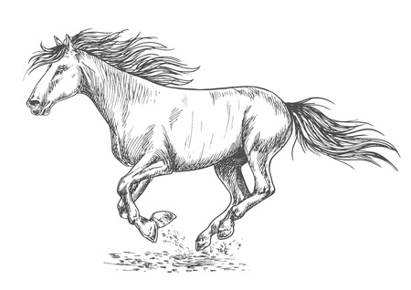 pacing: Running horse pencil sketch portrait. White mustang stallion rushing with gallop gait