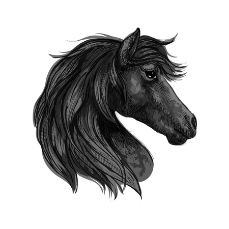 Raven horse head profile portrait. Black mustang with long wavy mane and thoughtful pensive eyes
