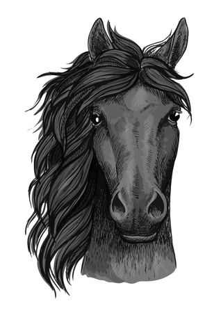Horse full face artistic portrait. Mustang stallion with mane looking straight forward