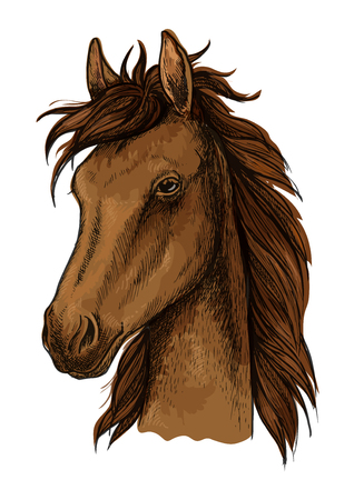 Brown proud horse artistic portrait. Brown mustang stallion with wavy mane, calm look, black eyes Illustration
