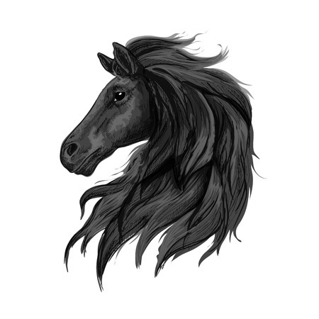 Black noble horse profile portrait. Raven stallion with long heavy wavy mane and thoughtful shiny eyes