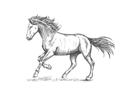 pacing: Prancing horse with stomping hoof. Sketch portrait of mustang with running gait and waving mane and tail