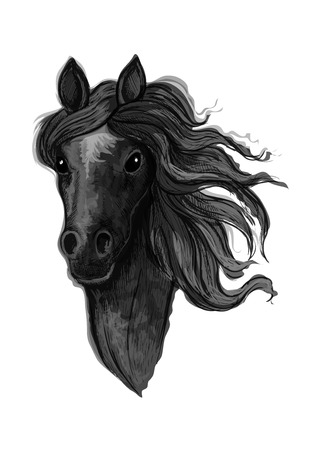 looking straight: Black noble raven mustang portrait. Horse stallion with wavy mane strands looking straight forward