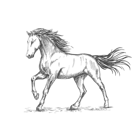 White horse with stamping hoof pencil sketch portrait. Prancing mustang with mane and tail waving by wind Illustration