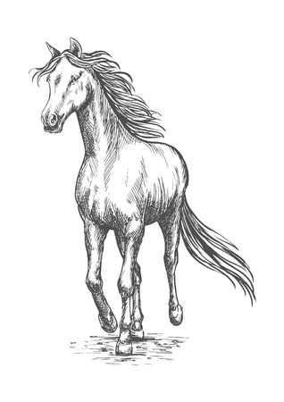 pacing: Running white horse pencil sketch. Vector galloping mustang stallion rushing against wind Illustration