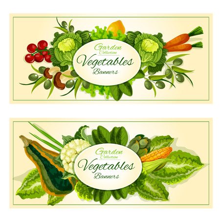 olive farm: Healthy farm vegetables and fruits banners with tomato, green onion, carrot, mushroom, olive, lemon, lettuce, cabbage, corn, zucchini cauliflower artichoke and green salads Illustration