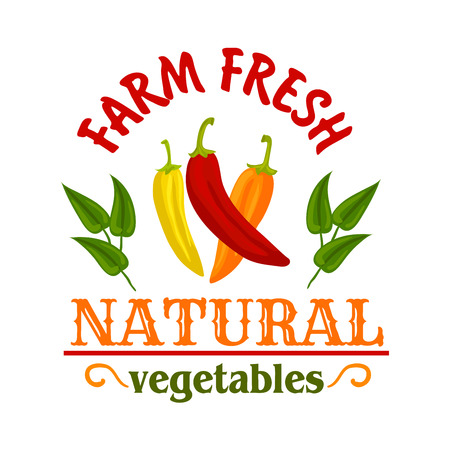 cayenne: Hot chilli and cayenne peppers vegetables symbol with red, yellow and orange spicy peppers, framed by leaves and headers Natural and Farm Fresh. Spice badge or chilli sauce packaging design