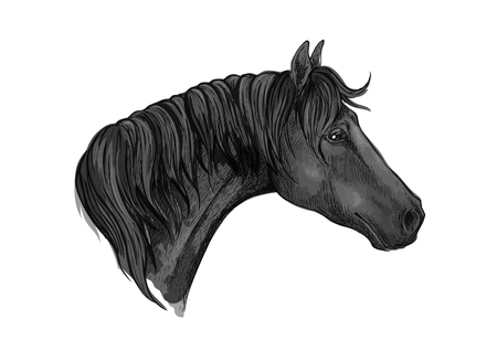 Gray mustang portrait with sad eyes. Horse stallion with mane strands falling on neck