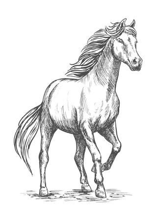White horse with stomping hoof. Pencil sketch portrait. Prancing mustang with proud glance in free motion
