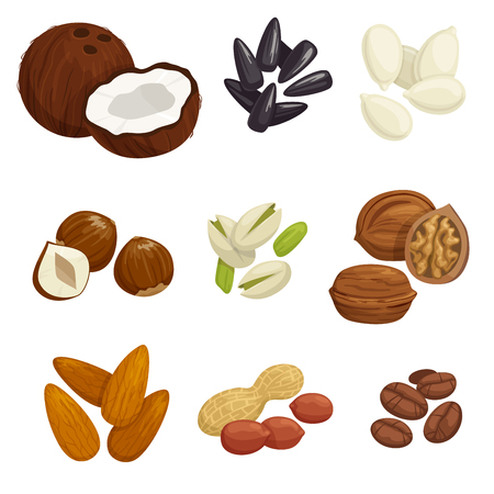 walnut: Nuts, grain and kernels. Vector icons of coconut, almond, pistachio, sunflower seeds, pumpkin seeds, peanut, hazelnut walnut coffee beans