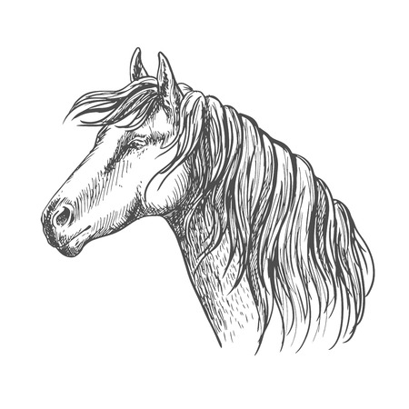 trustful: White horse with mane along neck. Mustang stallion sketch portrait with kind eyes and meditative glance Illustration
