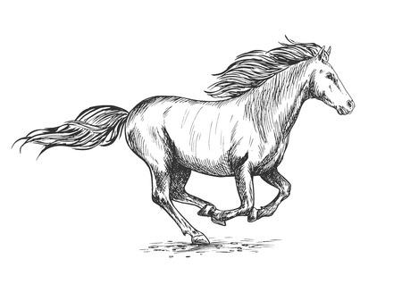 pacing: Running gallop white horse sketch portrait. Vector mustang stallion freely rushing against wind with waving mane and tail