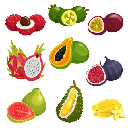exotic fruit: Tropical and exotic fruits isolated icons. Vector elements of lychee, dragon fruit pitaya, papaya, durian, passion fruit maracuja, carambola, fig, guava, feijoa