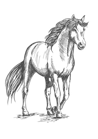 glance: White horse standing and resting with front hoof lifted up. Pencil sketch portrait. Powerful beautiful pedigree mustang with proud glance