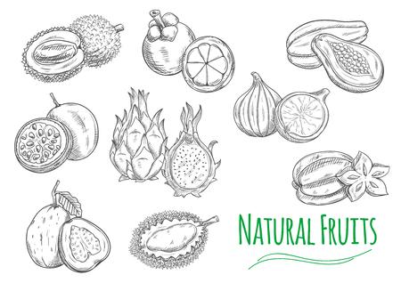 Frutti esotici e tropicali. Vector schizzo a matita isolati icone di durian, frutto della passione maracuja, guava, frutto del drago pitaya, mangostano, jackfruit, fichi, papaia, carambola
