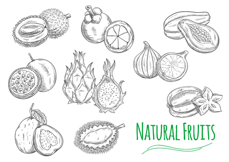 Exotic and tropical fruits. Vector pencil sketch isolated icons of durian, passion fruit maracuja, guava, dragon fruit pitaya, mangosteen, jackfruit, fig, papaya, carambola