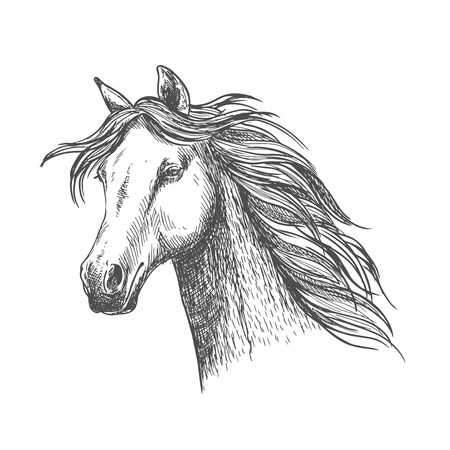 confiding: White graceful horse with waving mane along neck. Mustang stallion sketch portrait with wise eyes and calm glance Illustration