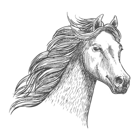 confiding: White graceful horse sketch portrait. Wild mustang with mane waving by wind, looking in far