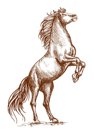 rearing: Brown horse rearing on hind hoofs sketch vector portrait. Unbridled horse stallion stands on its rears Illustration
