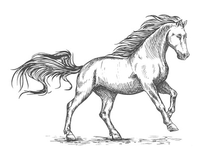 gallop: White horse running and stomping sketch portrait. Vector horse stallion freely gallop rushing against wind with waving mane and tail Illustration