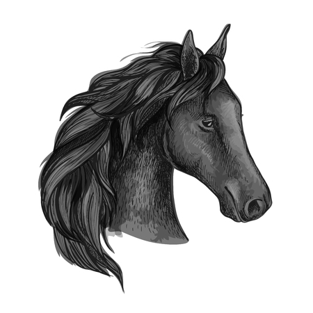 Black graceful horse portrait. Raven horse with wavy mane strands and half turned head Illustration