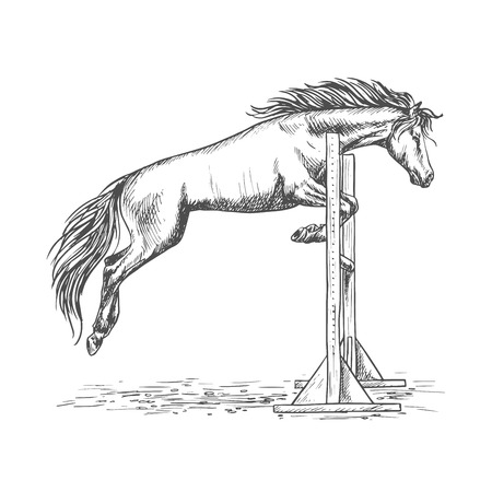 trained: White horse racing and jumping over barrier sketch portrait. Trained horse stallion on hippodrome sport horse races