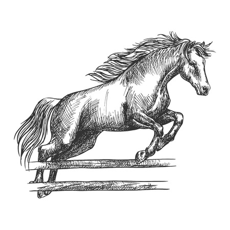 Strong horse runs and jumps over barrier.