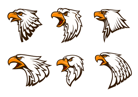 glance: Bald Eagle vector emblems set. Isolated icons of hawk with beak, harsh crying, furious glance. Falcon label for sport team mascot badge, guard shield, club identity label
