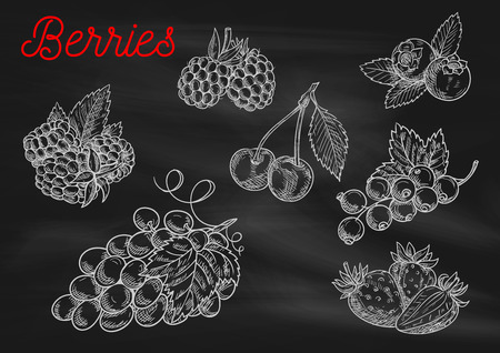 black board: Berries chalk sketch icons on blackboard background. Vector chalked berry strawberry, blackberry, blueberry, cherry, raspberry, black currant, grape with leaves for cafe, restaurant menu board