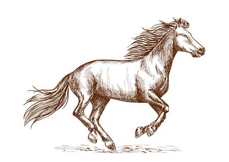 White horse running gallop portrait.
