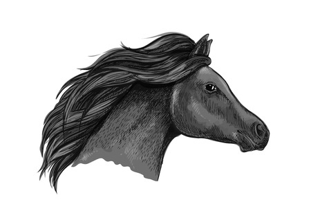 looking straight: Black graceful horse portrait. Illustration